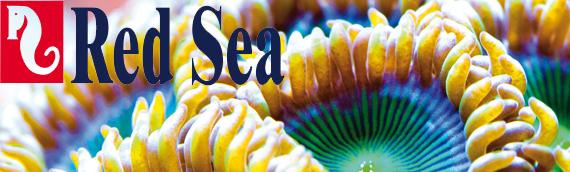 red sea blog copy